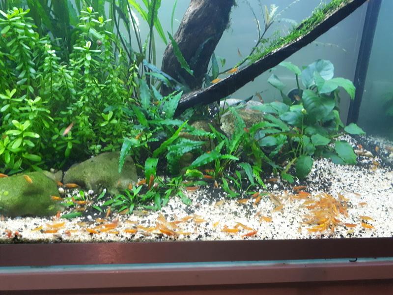 Mur végétal avec aquarium de 320L ---> Paludarium - Page 16 20170612