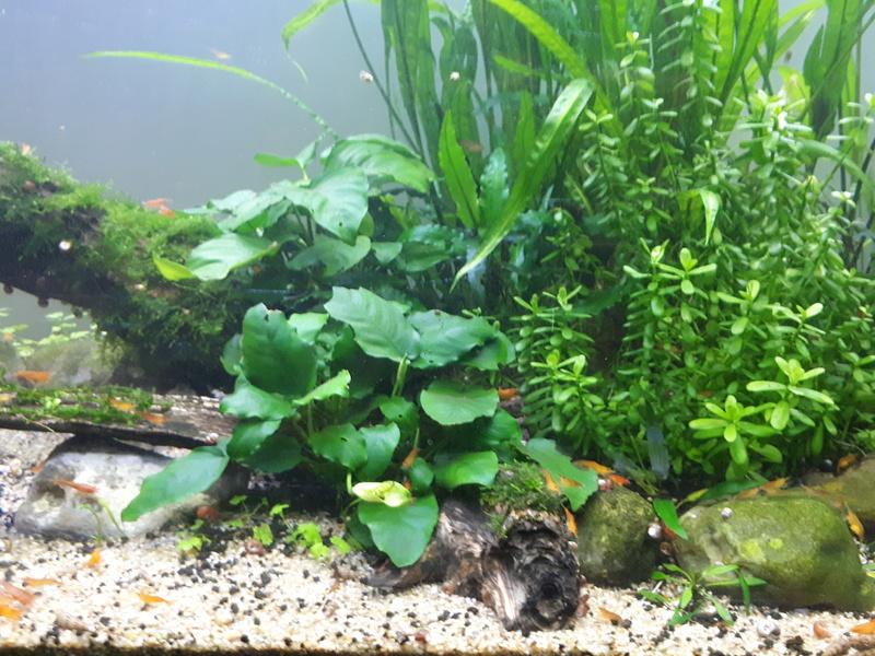 Mur végétal avec aquarium de 320L ---> Paludarium - Page 16 20170613