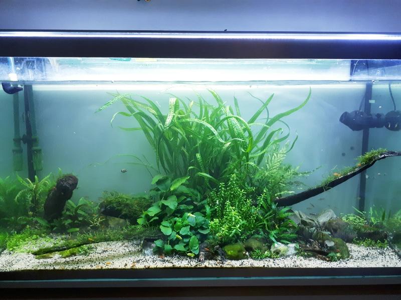 Mur végétal avec aquarium de 320L ---> Paludarium - Page 17 20170810