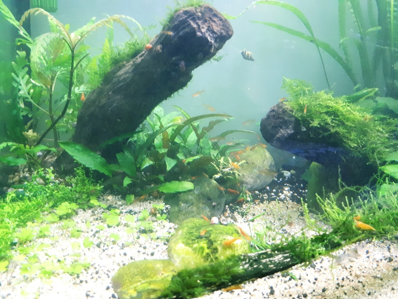 Mur végétal avec aquarium de 320L ---> Paludarium - Page 17 20170811