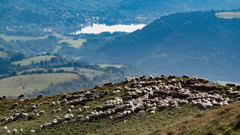 La bergère Cuzeau11