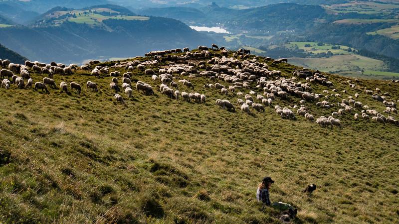 La bergère Cuzeau13