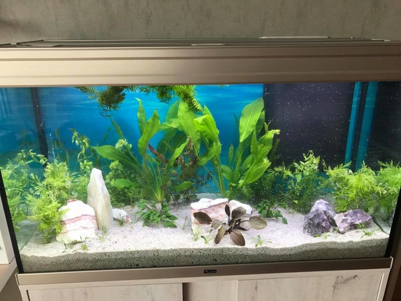 Préparation aquarium 200L enfin terminée ! Aquari11