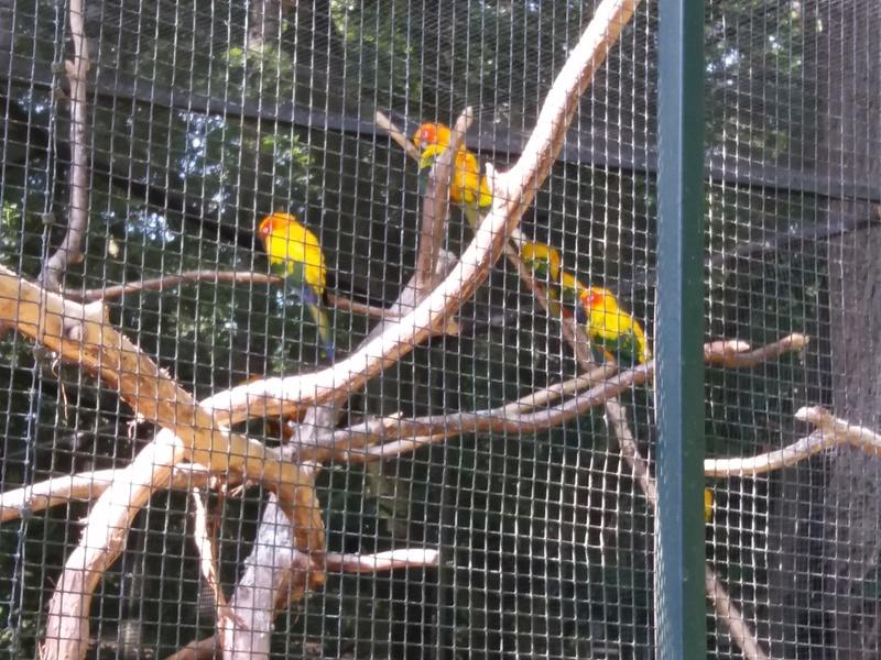 zoo de Beauval 20170761