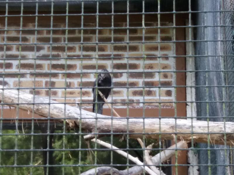 zoo de Beauval 20170764