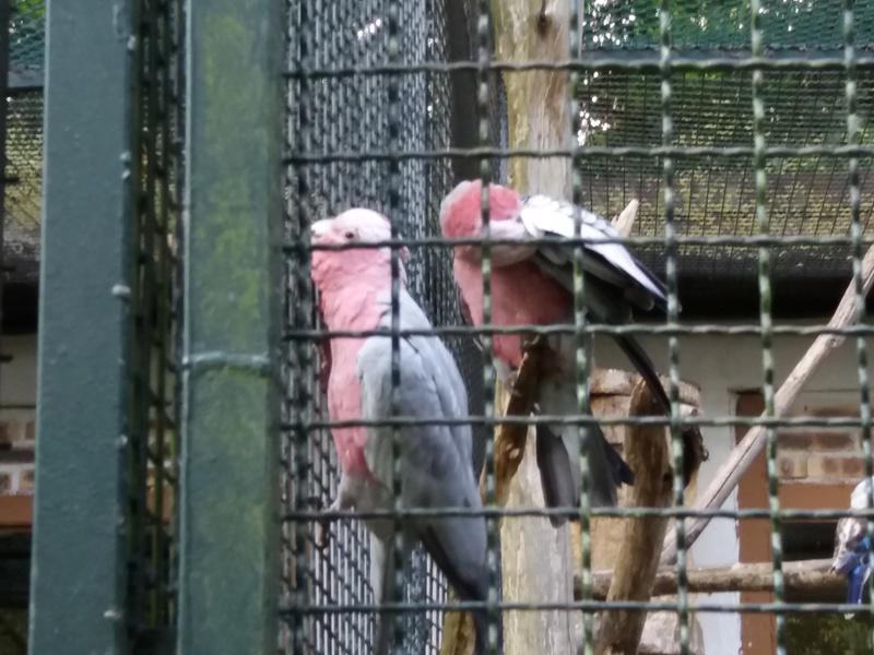 zoo de Beauval 20170766