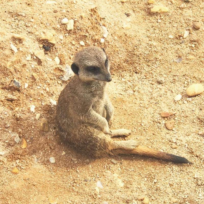 zoo de Beauval 20426910