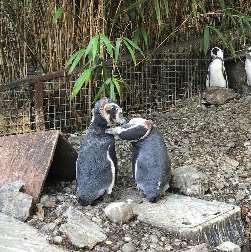 zoo de Beauval 20427110