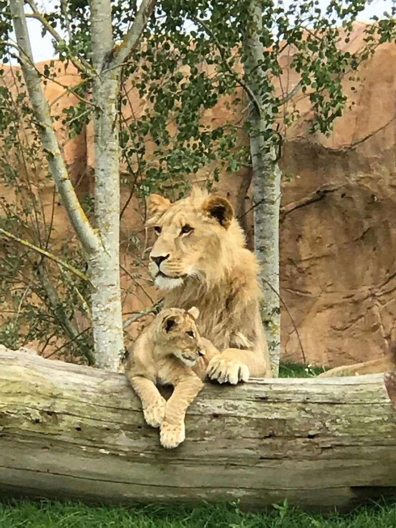 zoo de Beauval 20446110