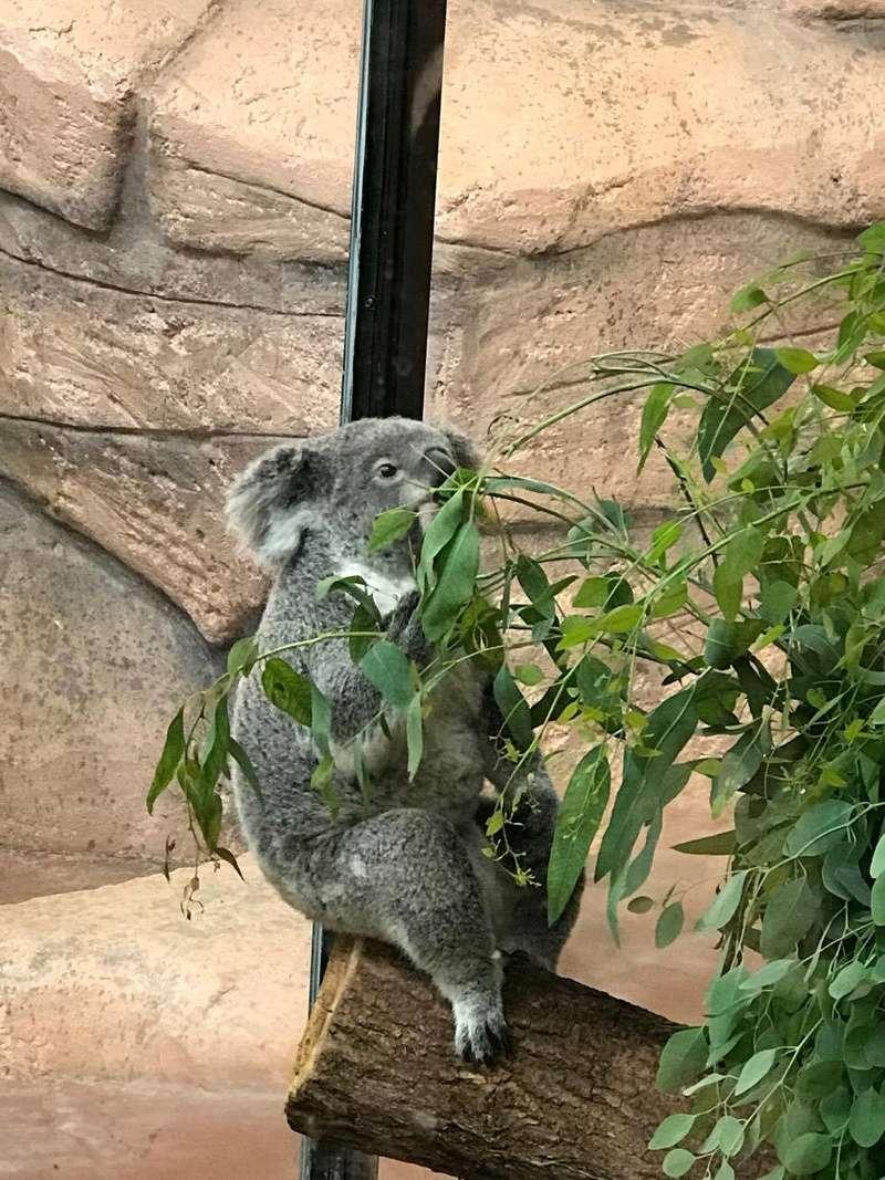 zoo de Beauval 20446111