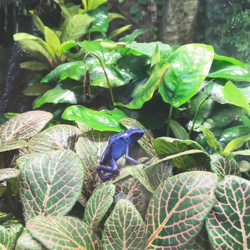 zoo de Beauval 20447210