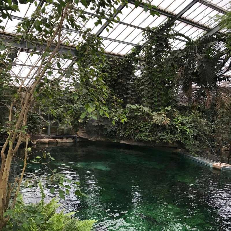 zoo de Beauval 20472410