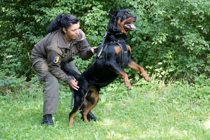 Animaux soldats - Page 7 2322
