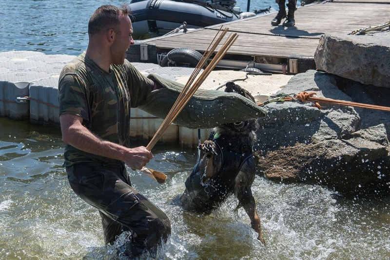 Animaux soldats - Page 7 2340