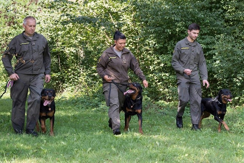 Animaux soldats - Page 7 2621