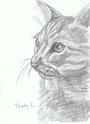 Mandy Lair's drawings 16614810