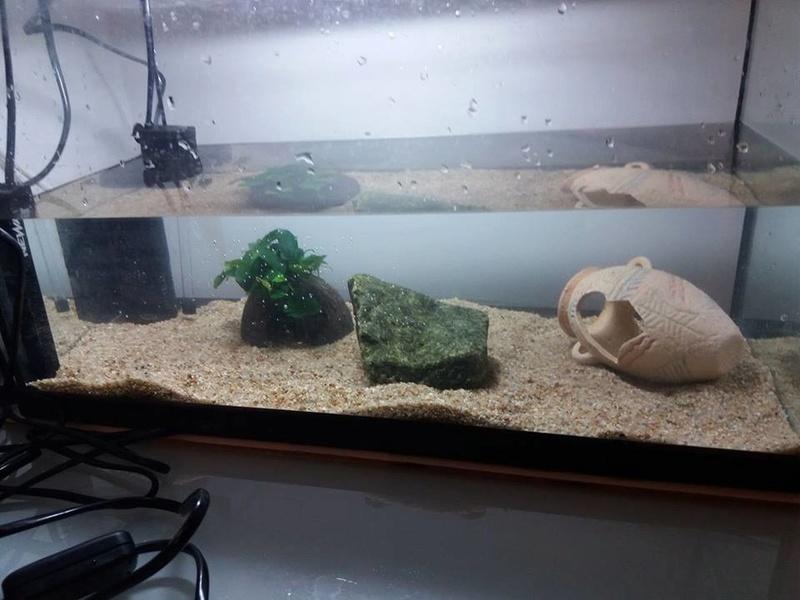 Evolution de mon aquarium en cours de cyclage :) 21271311