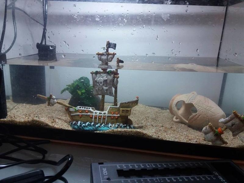 Evolution de mon aquarium en cours de cyclage :) 21272310