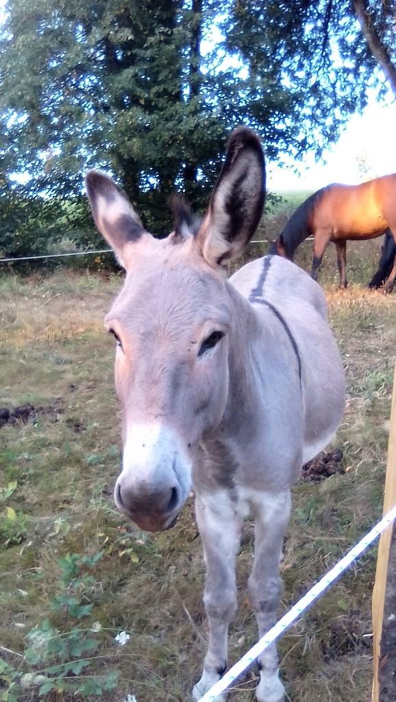 BOURIQUET - ONC âne né en 2009 - adopté en août 2017 par Marie - Page 2 02_09_16