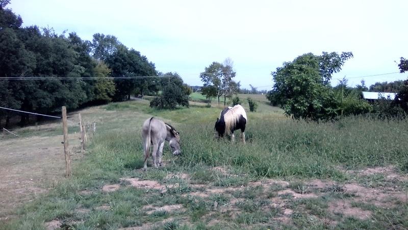 BOURIQUET - ONC âne né en 2009 - adopté en août 2017 par Marie - Page 2 02_09_17