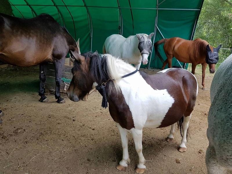 CANNELLE - ONC poney née en 2009 - adoptée en décembre 2013 par Catie - Page 3 1415