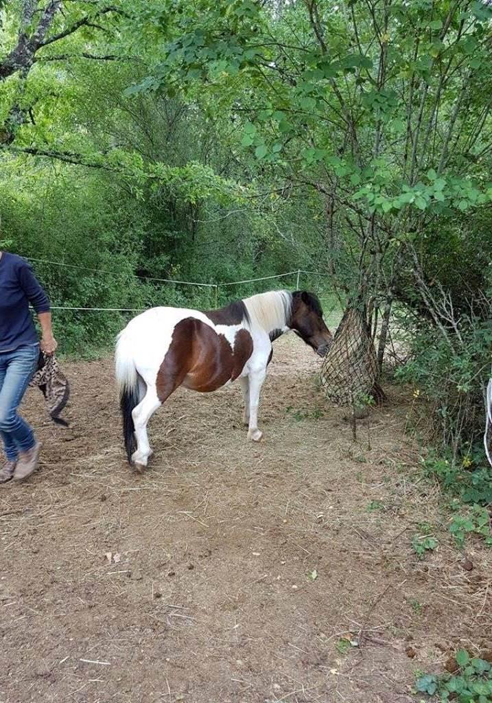 CANNELLE - ONC poney née en 2009 - adoptée en décembre 2013 par Catie - Page 3 1615