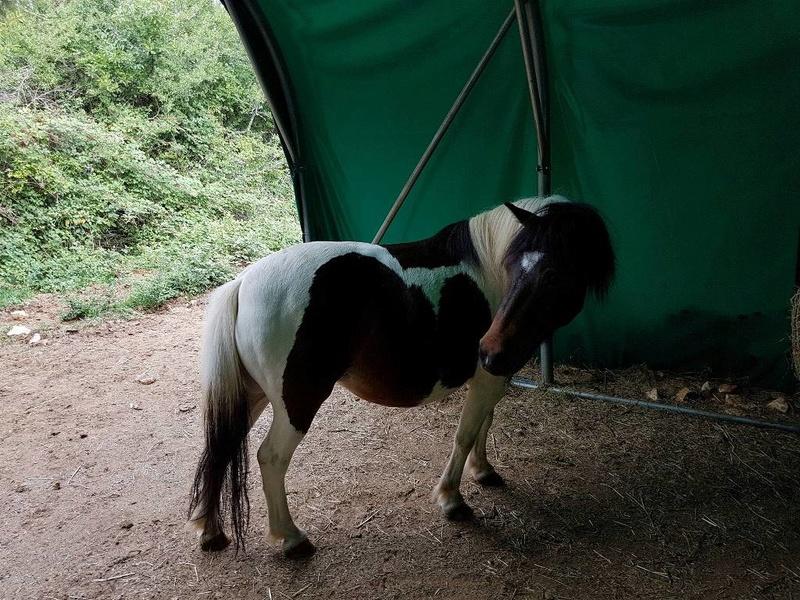 CANNELLE - ONC poney née en 2009 - adoptée en décembre 2013 par Catie - Page 3 1815