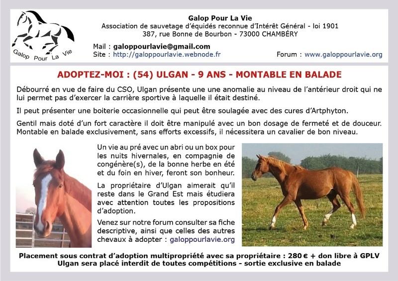 ULGAN – Cheval de Selle né en 2008 - Placé en janvier 2019 par sa propriétaire 2017_764