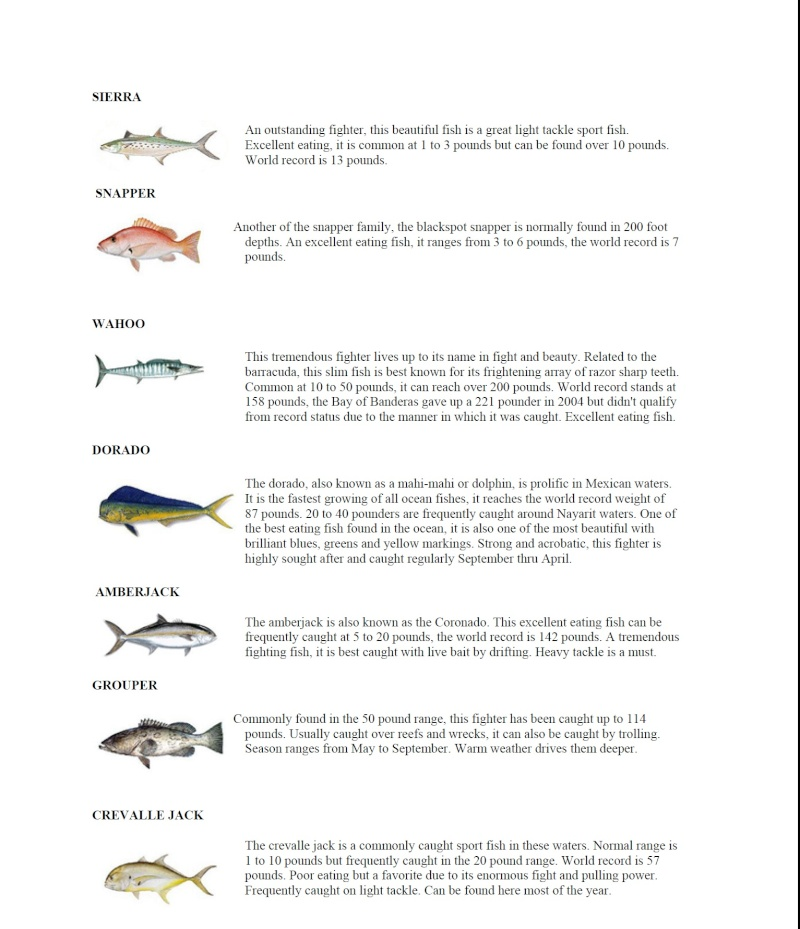 Salt Water Fishing Chart Fish_t11