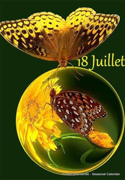 cairn de Juillet - Page 9 20139810