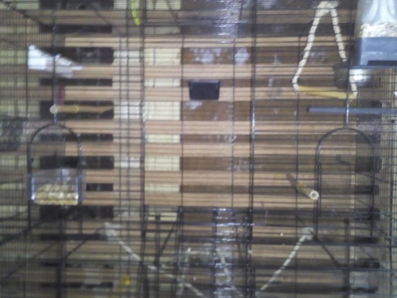 Choisir sa cage - Page 16 Img_2310