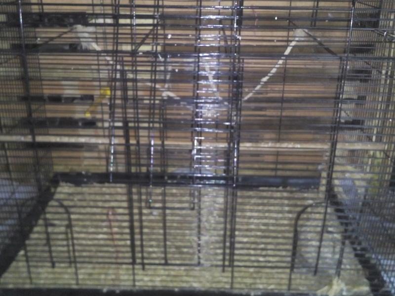 Choisir sa cage - Page 16 Img_2311