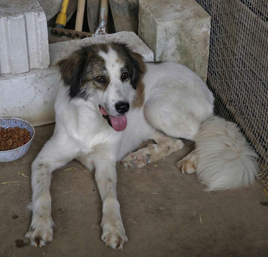 Pumba, chienne née en 2015, taille moyenne-grande _x9a6011