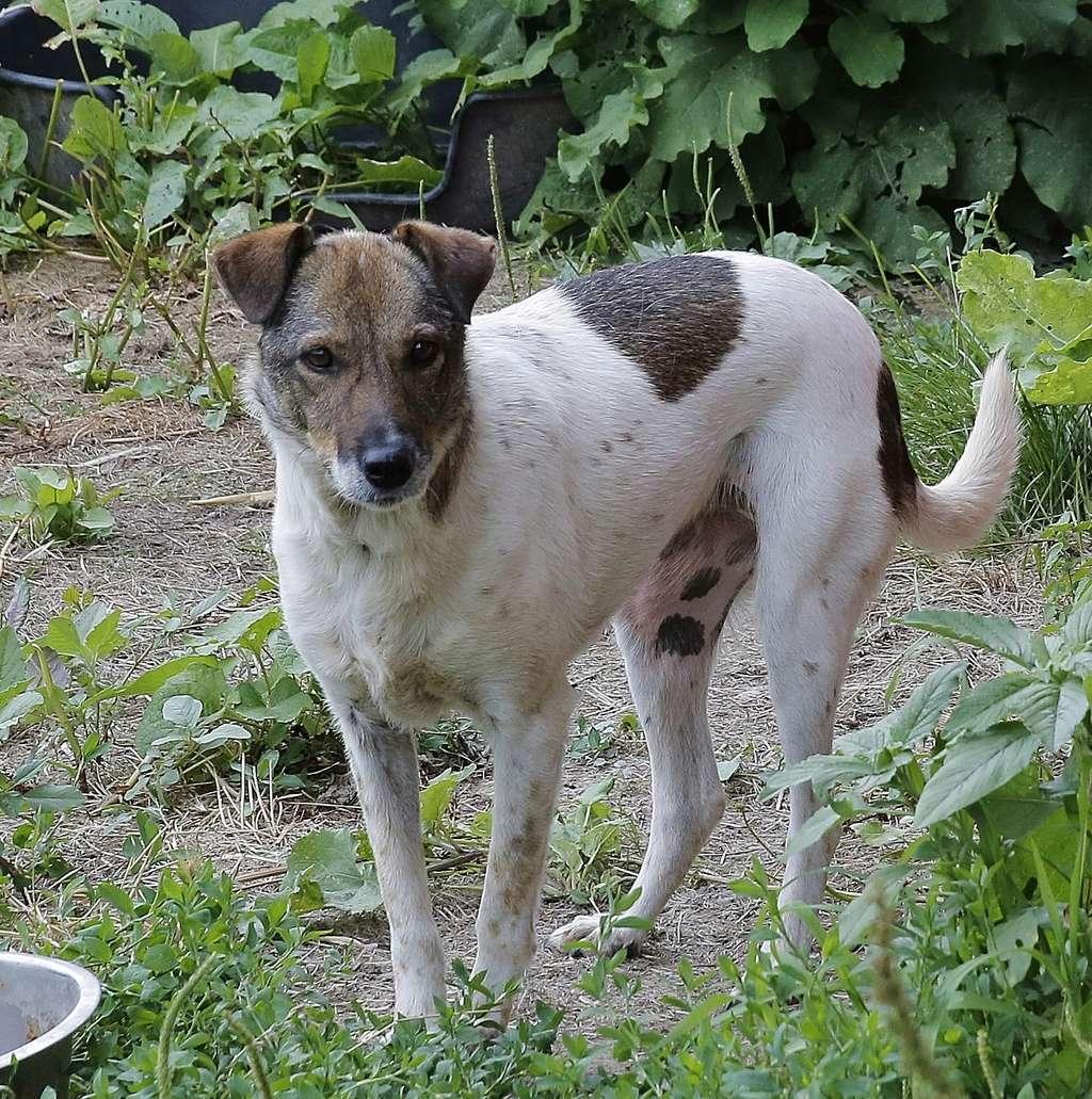 Alba, chienne magnifique, née en 2012 _x9a6410