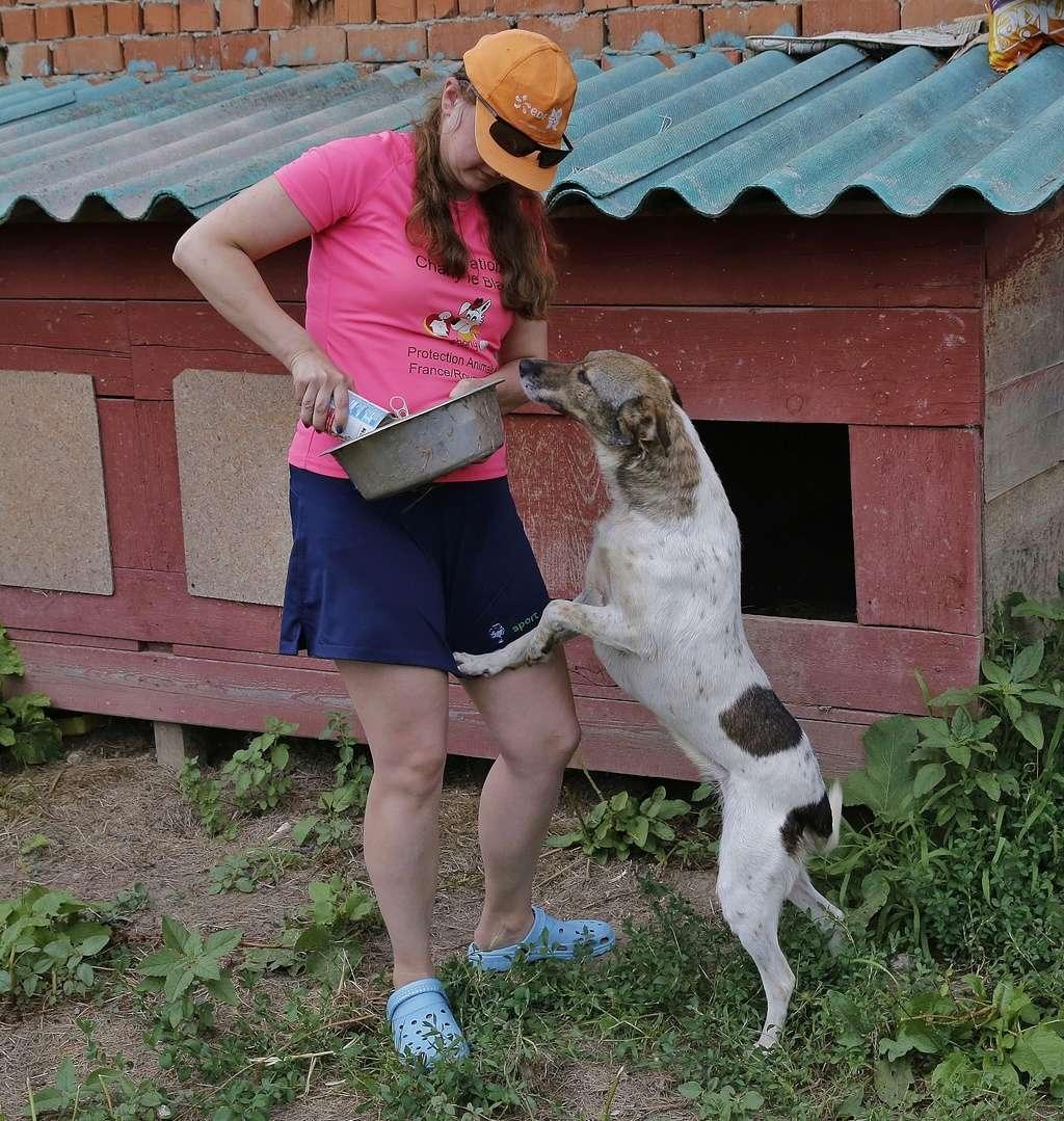 Alba, chienne magnifique, née en 2012 _x9a6411