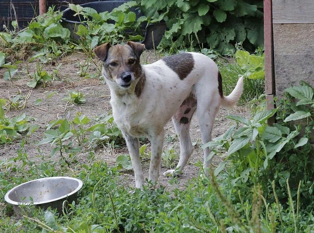 Alba, chienne magnifique, née en 2012 _x9a6412