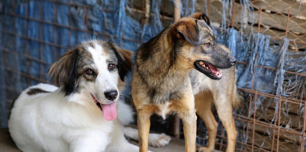 Pumba, chienne née en 2015, taille moyenne-grande Hx9a6315