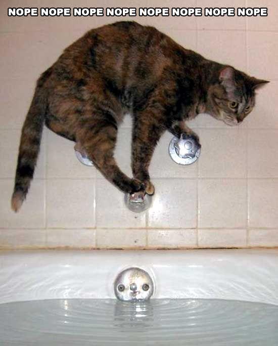 HUMOUR : le chat dans tous ses états - Page 37 0bbdf110