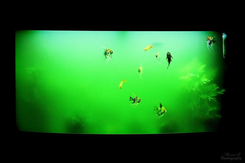 Mes aquariums - Page 3 Img_3410