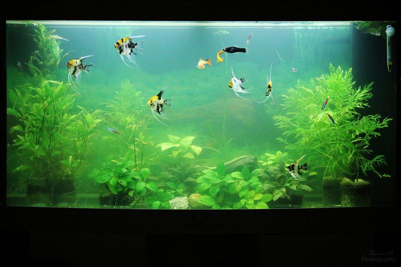 Mes aquariums - Page 3 Img_4710