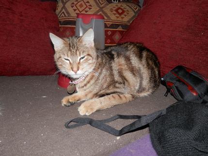Retour chez les Handi'cats P1250023