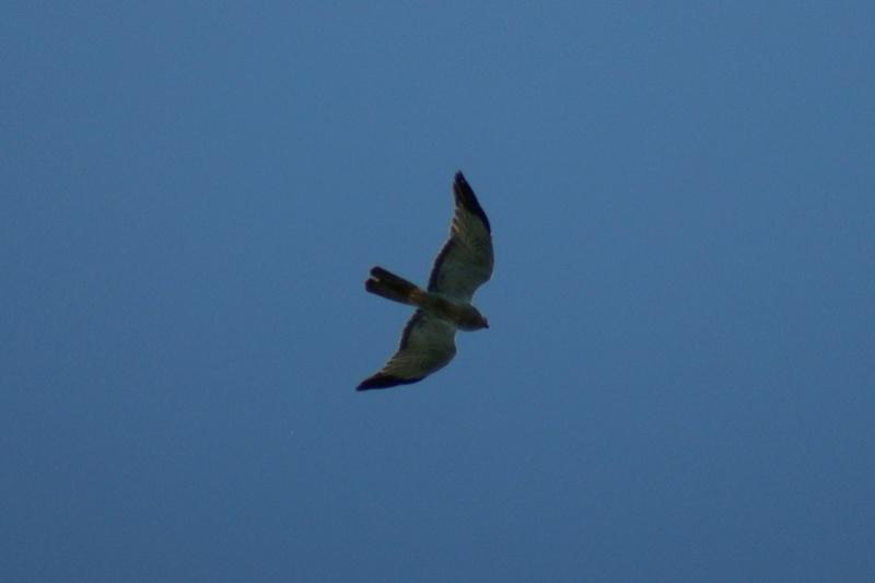 2 oiseaux à identifier.. Parc_d29
