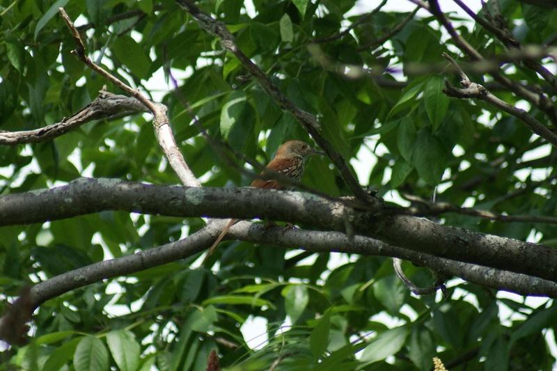 2 oiseaux à identifier.. Parc_n32