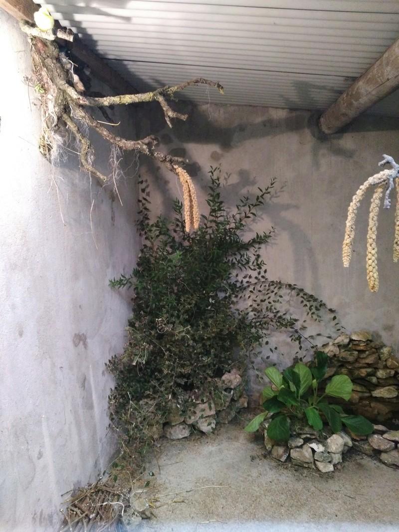 Ma volière Img_2011