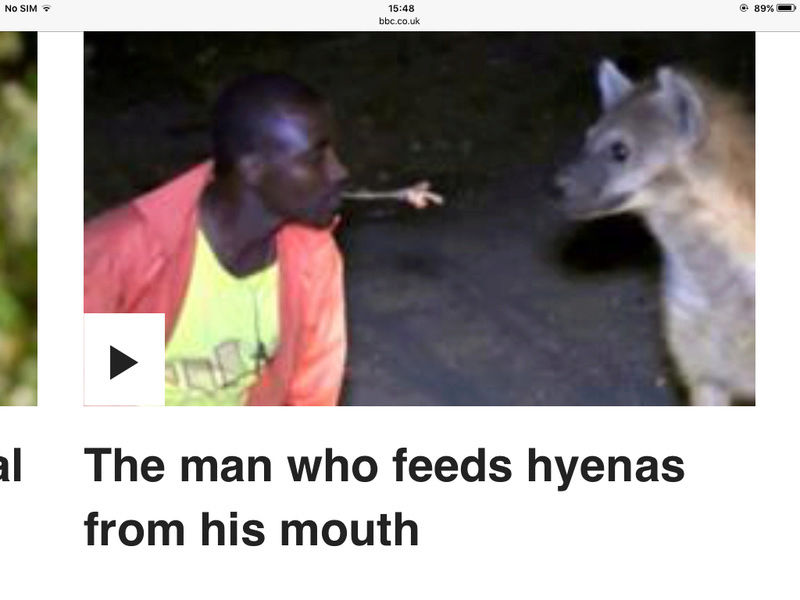 And the next headline reads,,, Man Bit In Face By Hyena... Image54