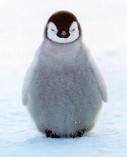 Dessine moi un pingouin ! - Page 2 8076cc10