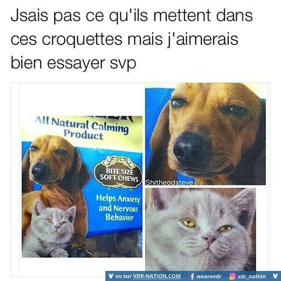 HUMOUR - blagues - Page 4 A3aff011