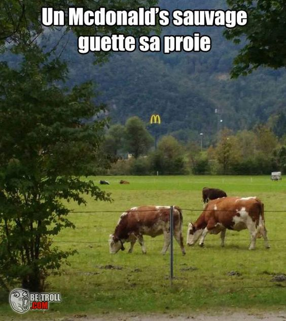 HUMOUR - blagues - Page 5 C9bff210
