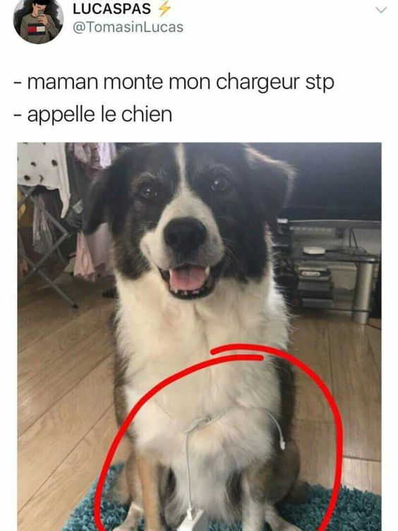 HUMOUR - blagues - Page 5 D1047610