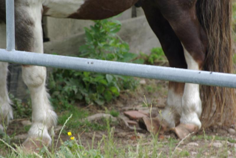 Venir en aide a un poney Imgp0210